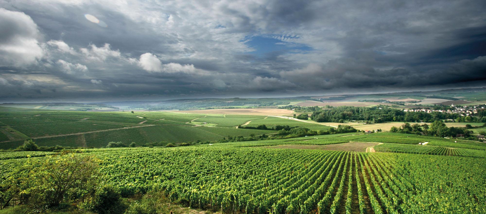 Chablis: si scrive Chablis, si legge Chardonnay