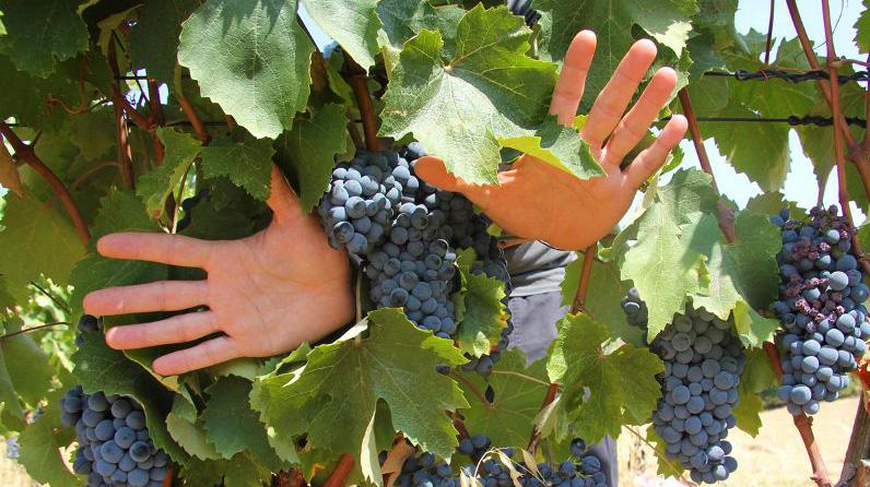 vino-tormentone-web-della-vendemmia