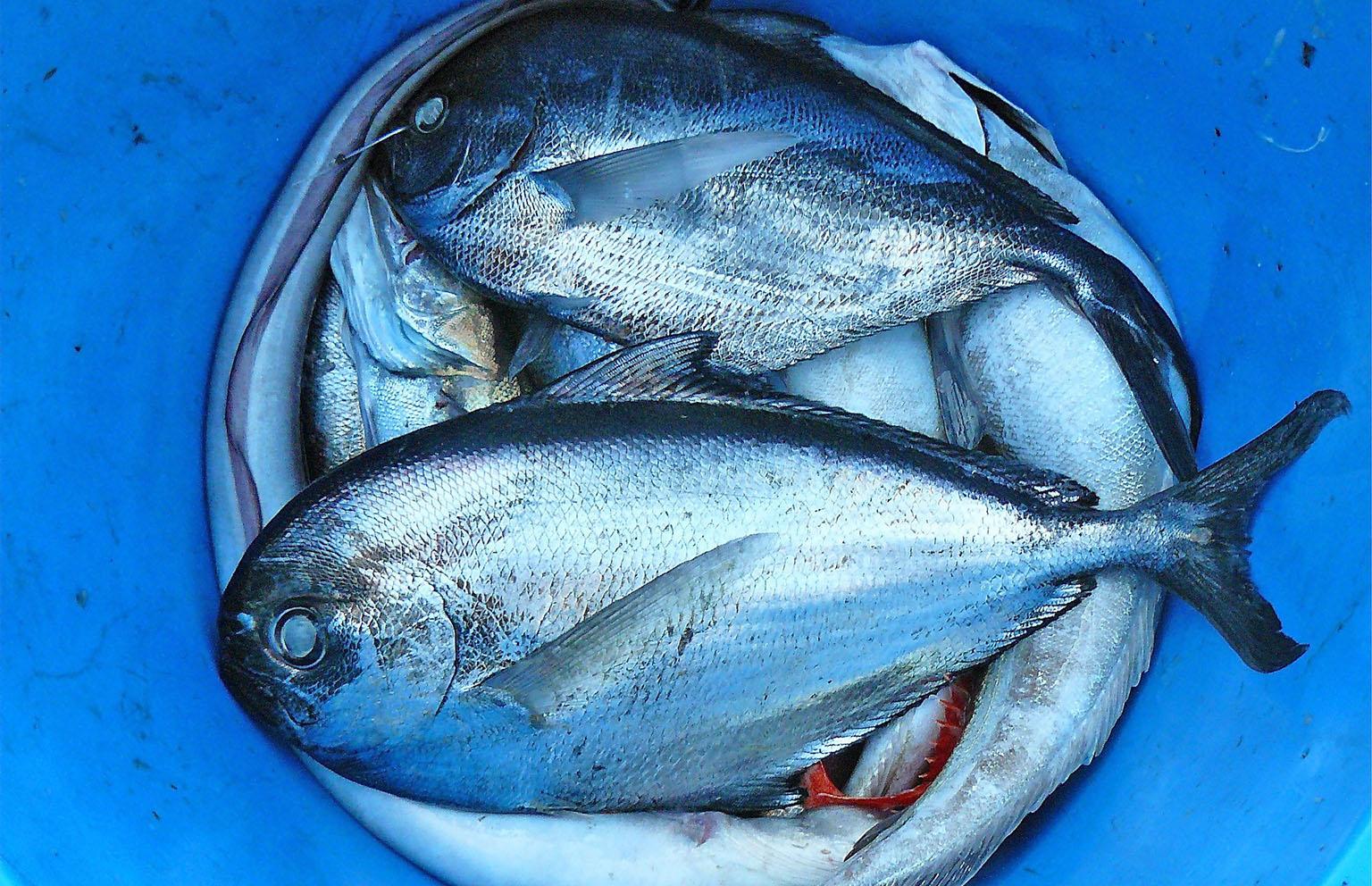 Erich Branchini: corso sul tema del pesce