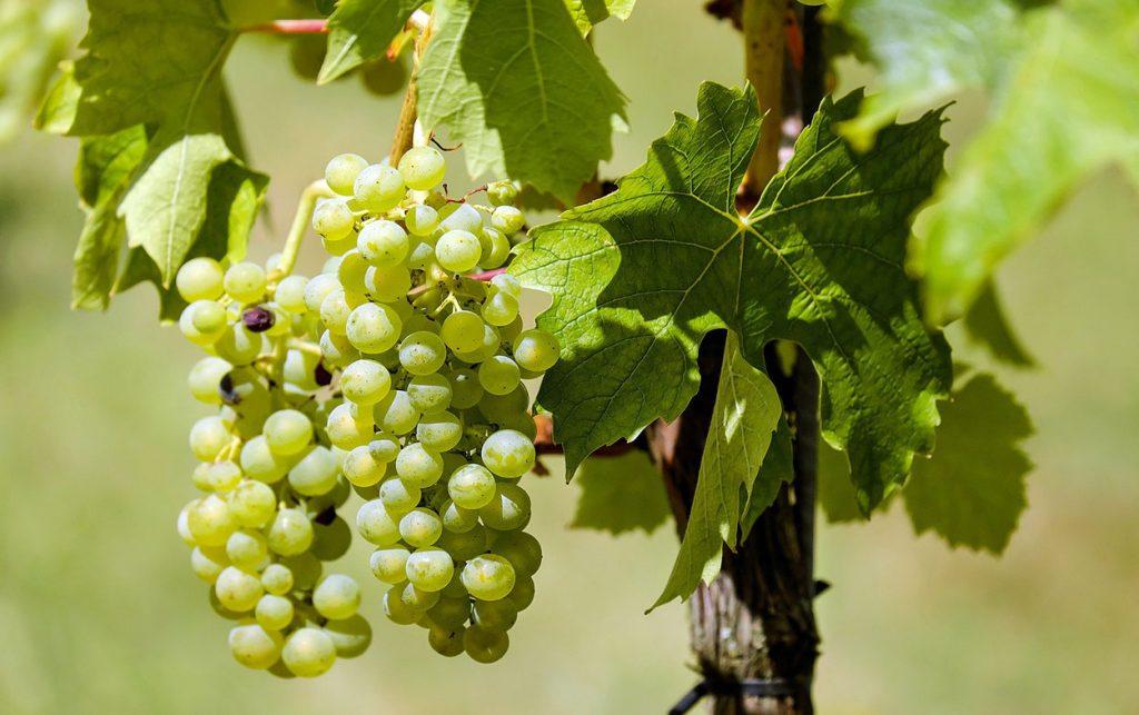 Roero Days: i vini del Roero