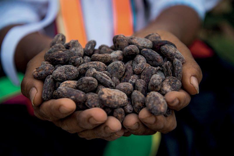 perù cacao