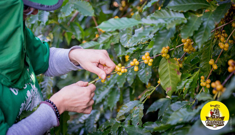 Barista & Farmer: a maggio in Colombia