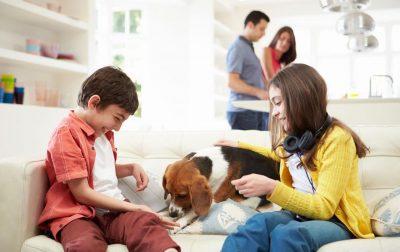 Pet in Italia: animali membri a tutti gli effetti della famiglia