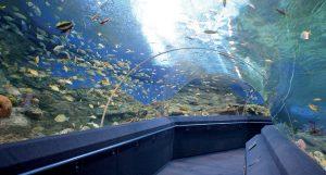 thailandia-acquario-underwater-world