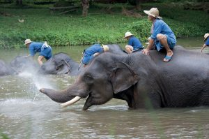 thailandia-elephant-conservation-center