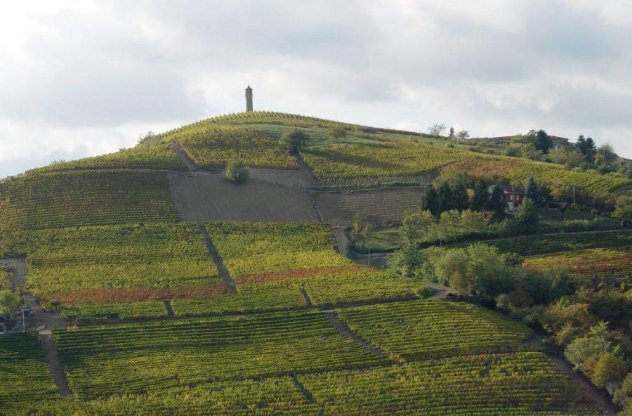 Canelli, città del vino