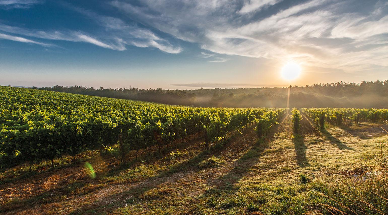 La mineralità nel vino è una percezione tattile