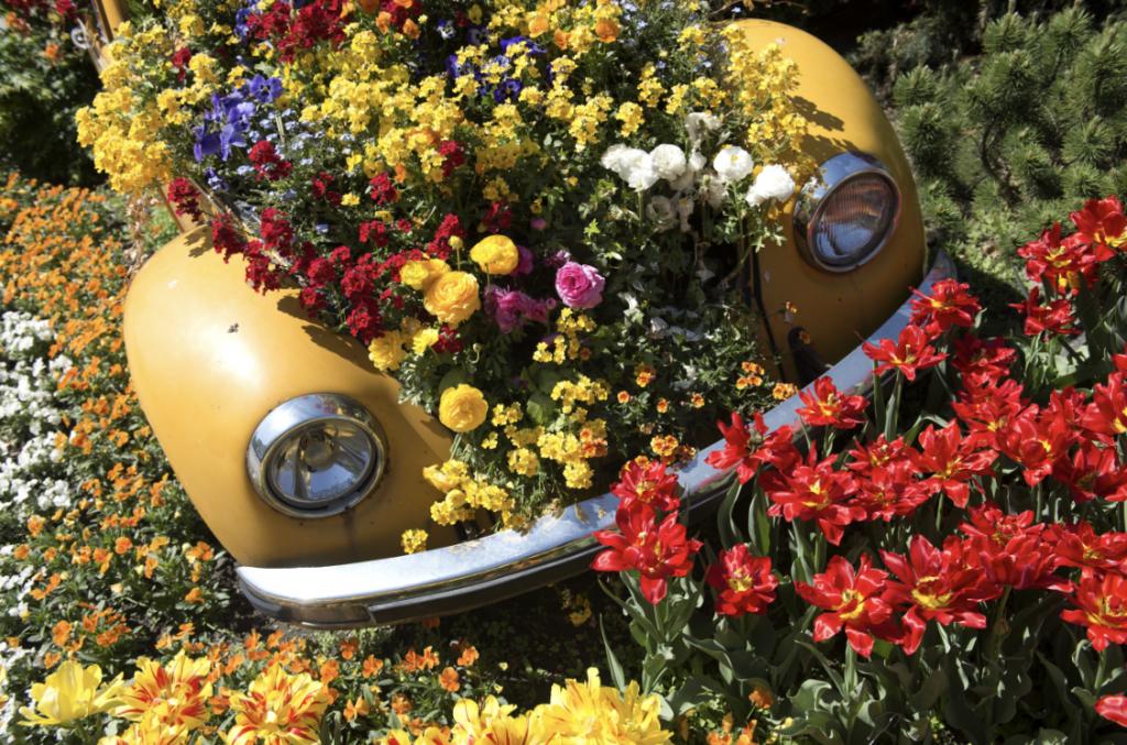 festa della fioritura: Lana e dintorni