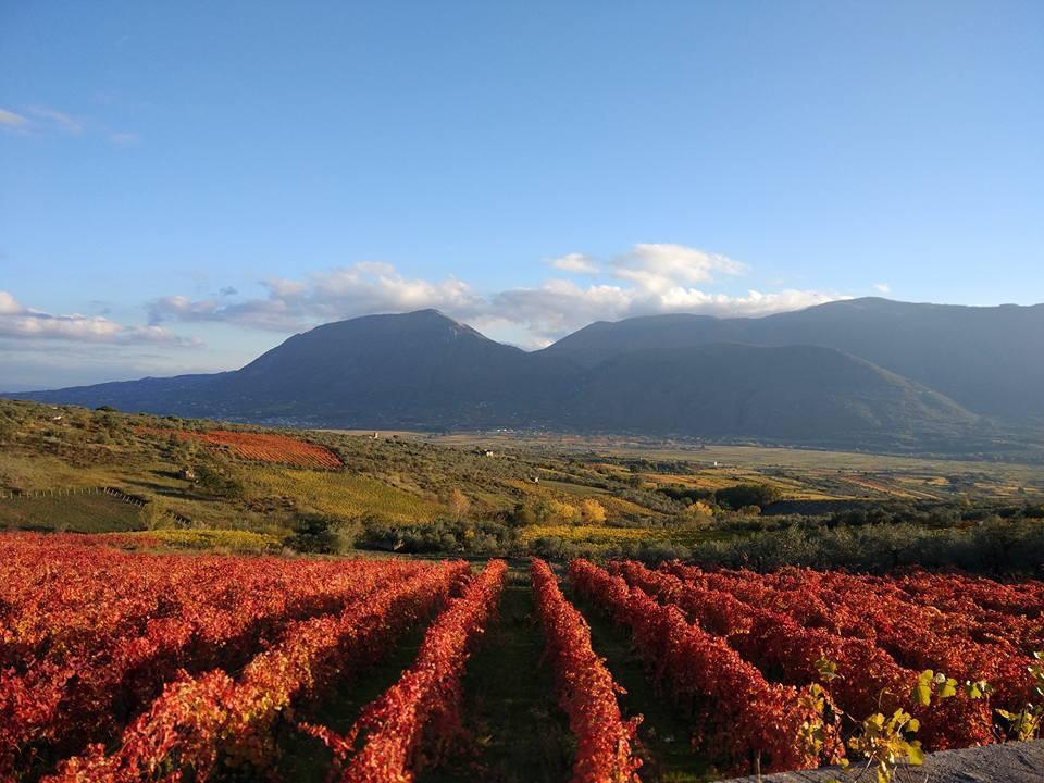 Città europea del Vino 2019: Sannio Falanghina e Matera