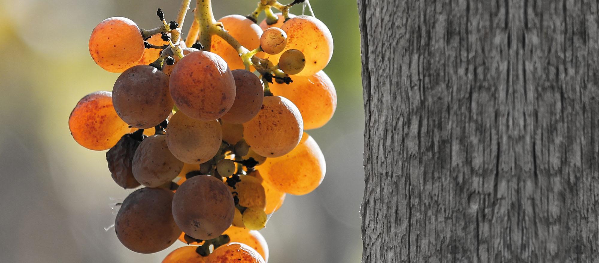 Vini naturali: esistono davvero?