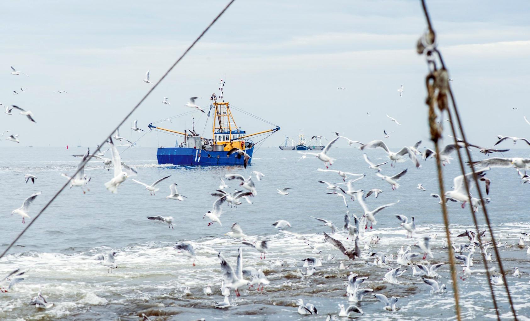 Pesca sostenibile: il report di MSC