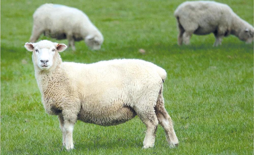 Weganool: l'alternativa vegana alla lana