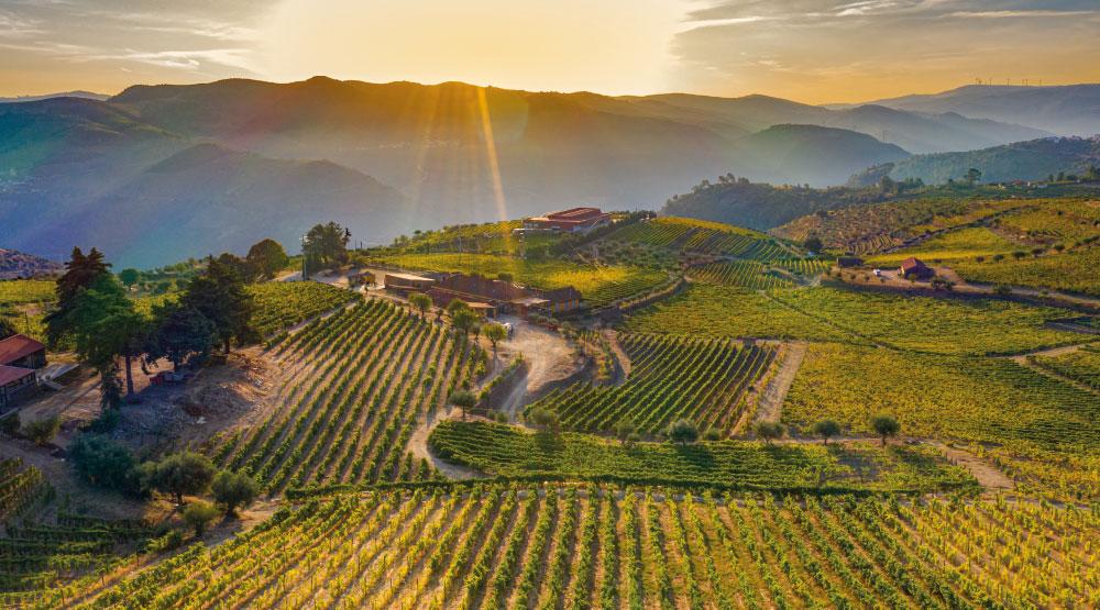 Azienda vinicola. Come sopravviverà il settore del vino?