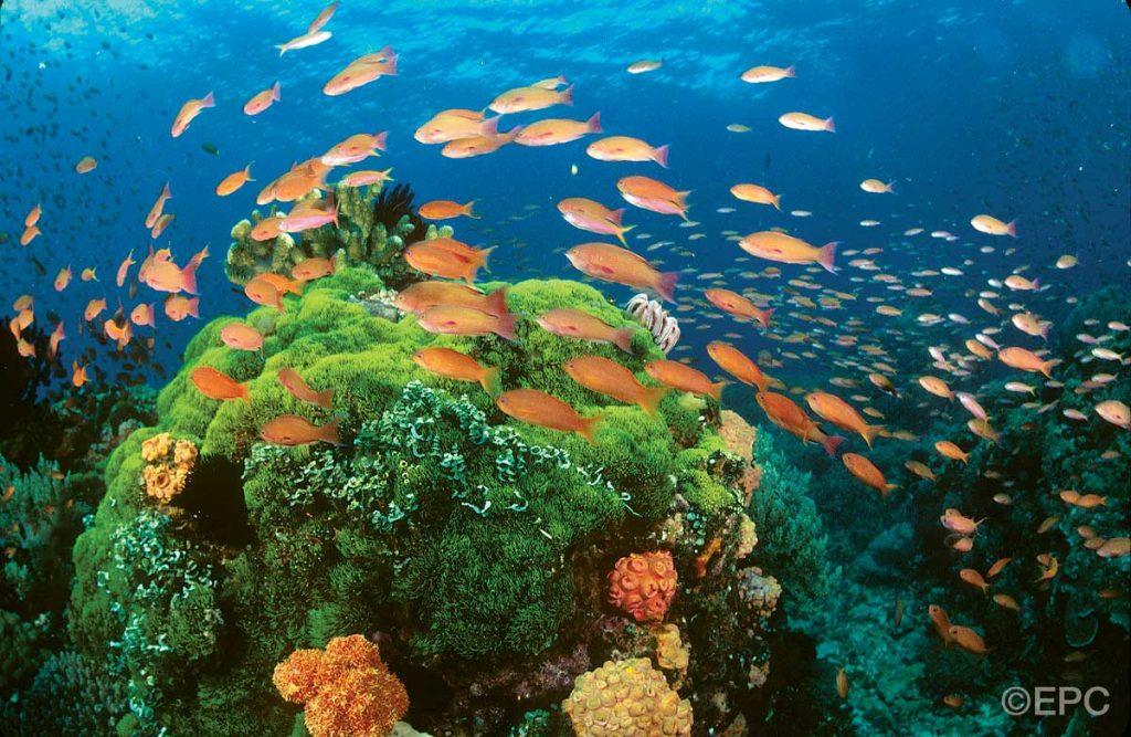 Filippine: pesci e barriera corallina