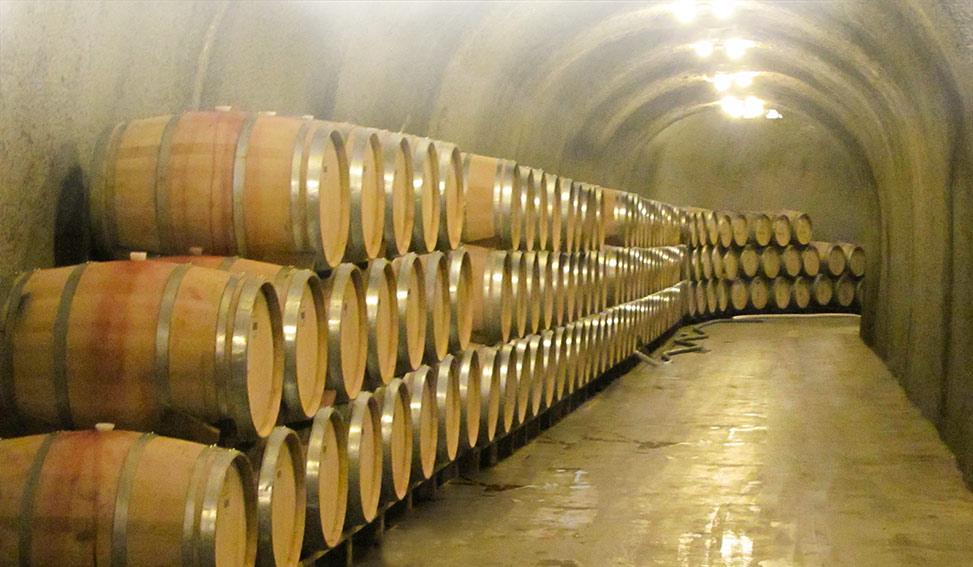 settore vitivinicolo italiano